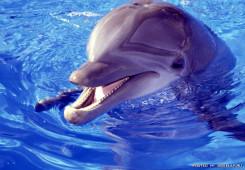 4 июля – Международный день дельфинов-пленников