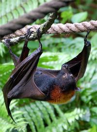 20–21 сентября – Международная ночь летучих мышей