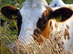2 октября – Всемирный день сельскохозяйственных животных