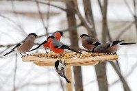 В нашем сердце есть и для птиц тепло: советует библиограф